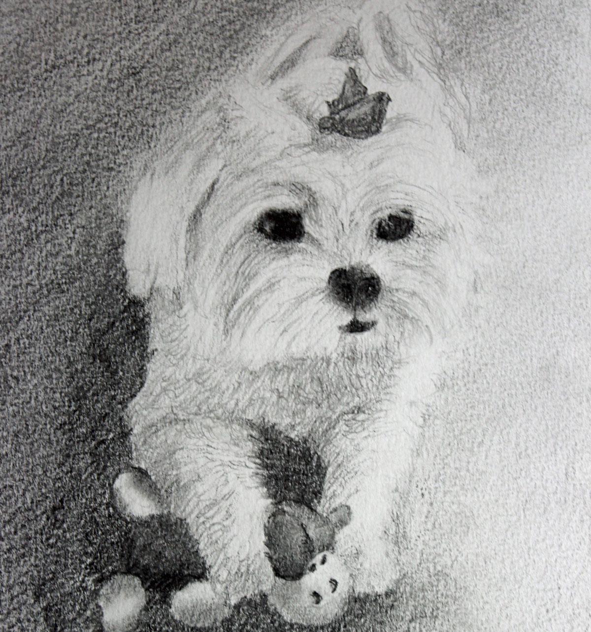 Sketch of Dakota, a Maltese, Playing